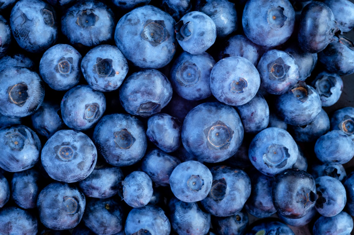 blueberries_blog