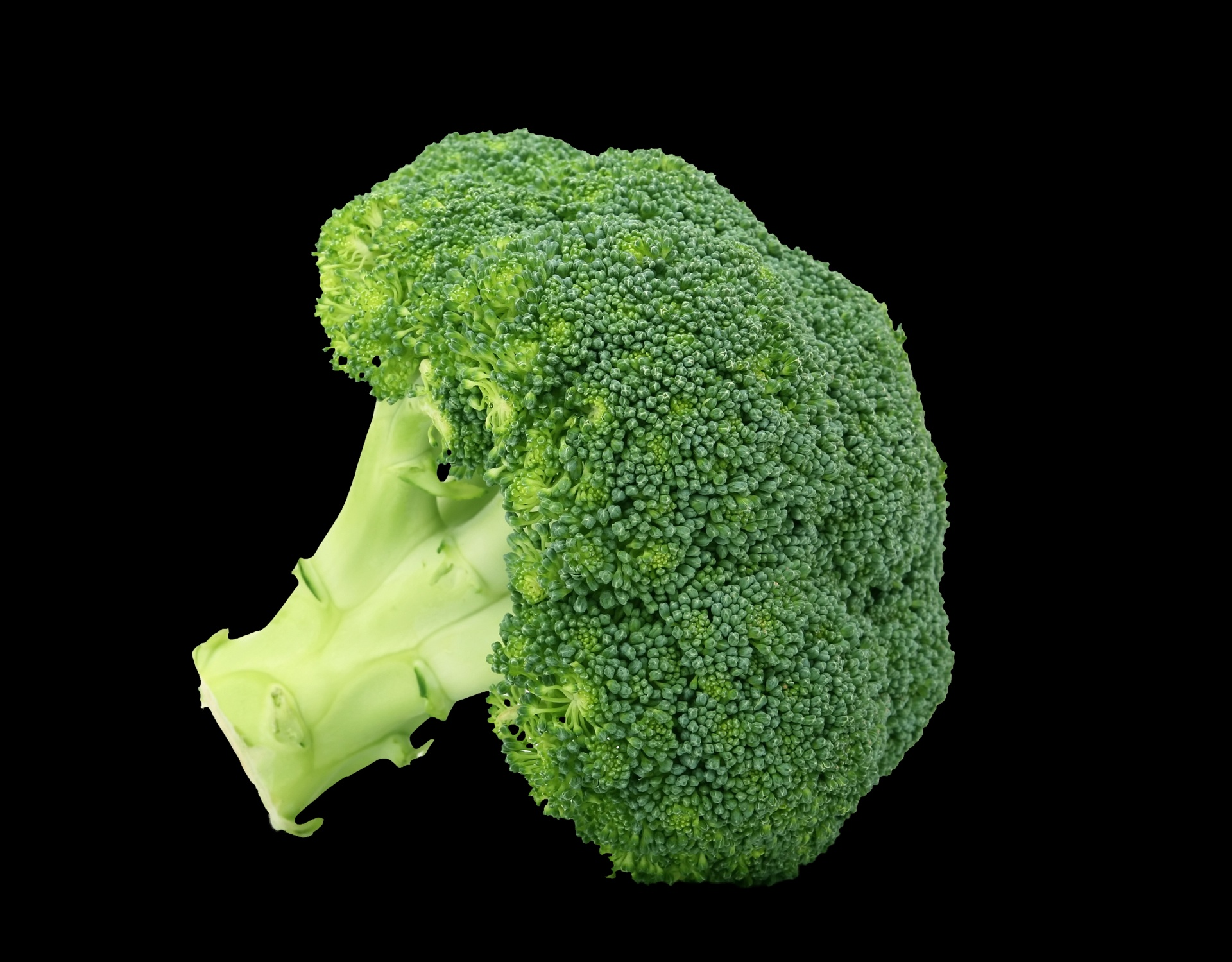 broccoli-on-black-background