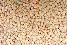 dry-lentils-background